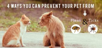 4 Ways You Can Prevent Your Pet from Fleas and Ticks