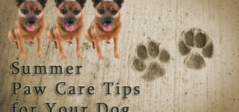 Summer Paw Care Tips for Your Dog
