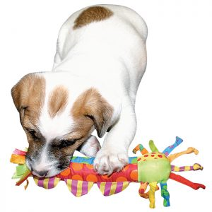 Tips To Ease Puppy Dentition Troubles