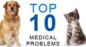Top Ten Medical Problems in Dogs and Cats