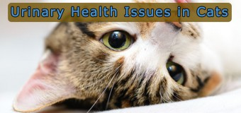 Most Common Urinary Health Issues in Cats