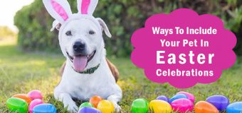 Pet Activities: 4 Ways To Include Your Pet in Easter Celebrations