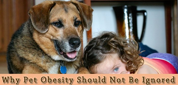 Why Pet Obesity Should Not Be Ignored