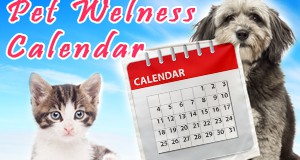 Wellness Calendar – Flawless Technique for Organized Pet Health Care