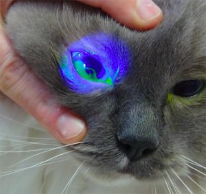 cat eay care treatment
