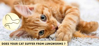 Does your Cat Suffer from Lungworms?