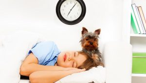 change the schedule with doggy during new baby arrival