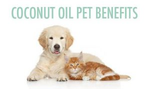 Coconut oil dogs cats pets benefits