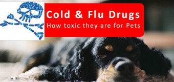 Cold & Flu Drugs: How Toxic They Are For Pets