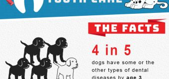 Dental Care Can Help Your Dog Live Up To 20% Longer