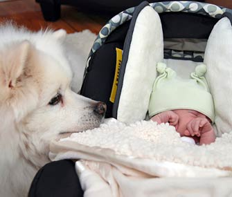doggy sniffing new baby