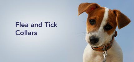 fleas and ticks dog collars