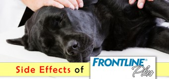 Reasons Behind the Side Effects of Frontline Plus