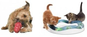 indoor games for pets