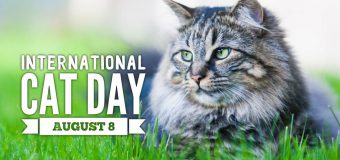 Happy International Cat's Day! Let's Make It Special For Your Furry Friend
