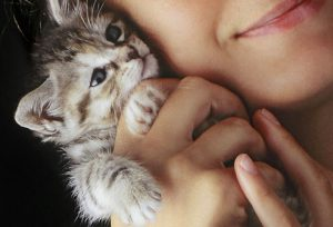 Kids to Take Care of a Newly Adopted Pet Kitten