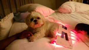 light therapy for pets