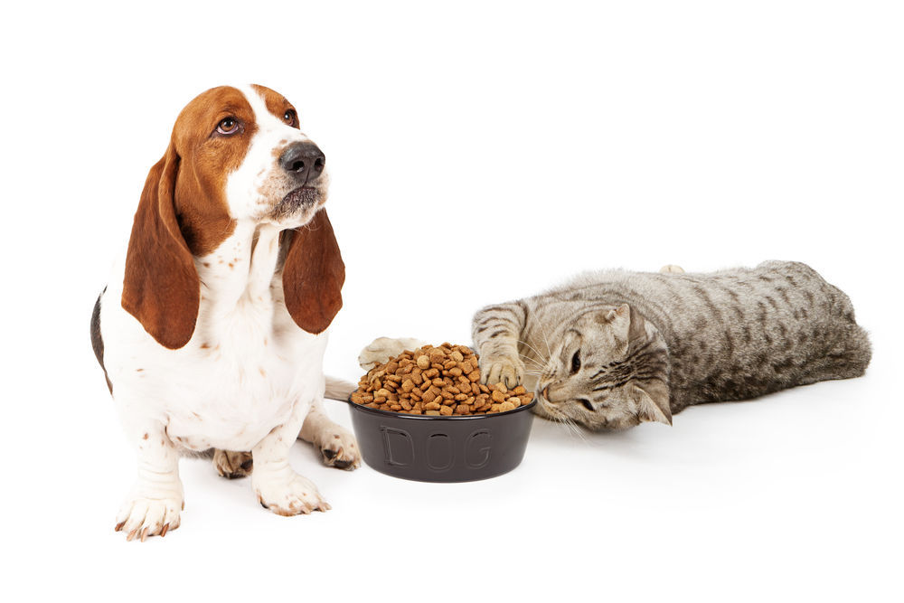low calorie pet foods