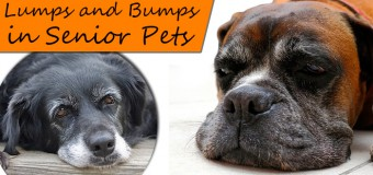 Learn More about Skin Lumps and Bumps on Dogs