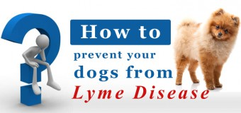 Lyme Disease: How To Prevent Your Dogs From It?