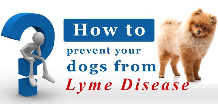 Lyme Disease Tips
