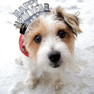 new year celebration with cute puppies
