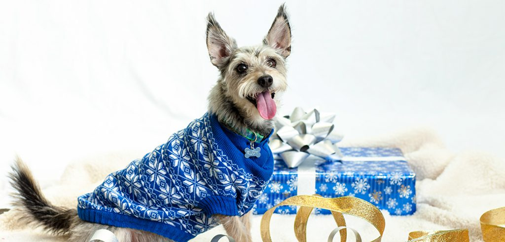 pet care holiday safety tips