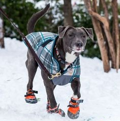 pet safety in cold weather