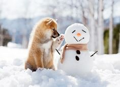 pet with Snowman