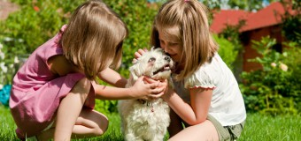12 Reasons Why No One Can Ever Replace Your Pet (Episode#2)