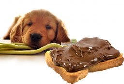 rsz_dog-has-eaten-the-chocolate