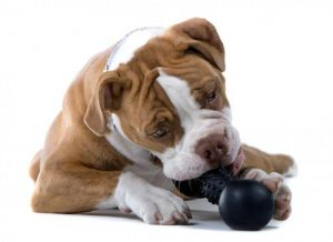 provide chew toys for dog