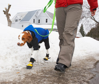 safety walking dog in the winter