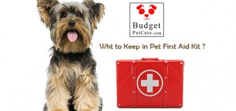 This National Pet First Aid Awareness Month Find What To Keep