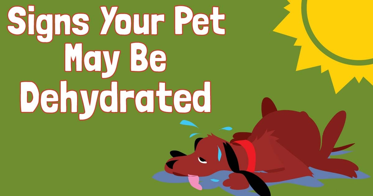 signs your pet may be dehydrated
