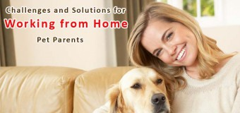 Challenges and Solutions for Working from Home Pet Parents