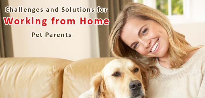 solutions-for-working-from-home-pet-parents