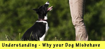 Understanding Why your Dog Misbehave