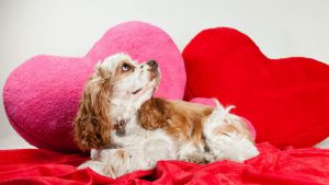 Valentine Day Gifts for Pets