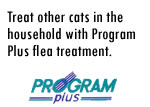 Program Plus Cats Step Three