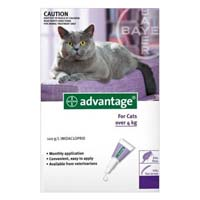 Image of Advantage Cats over 9lbs Purple 8 Months