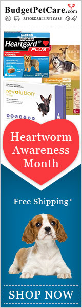 Save your Dog on Heartworm Awareness Month!  Get 12% Discount + Free Shipping. 10% Cashback, Use Coupon Code: HWAM12