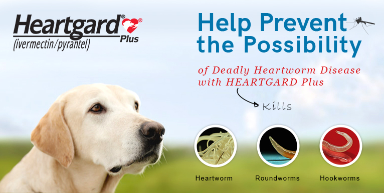 Heartgard Plus Buy Heartgard Plus Chewable for Dogs Online